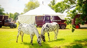Giffords Circus Big Top